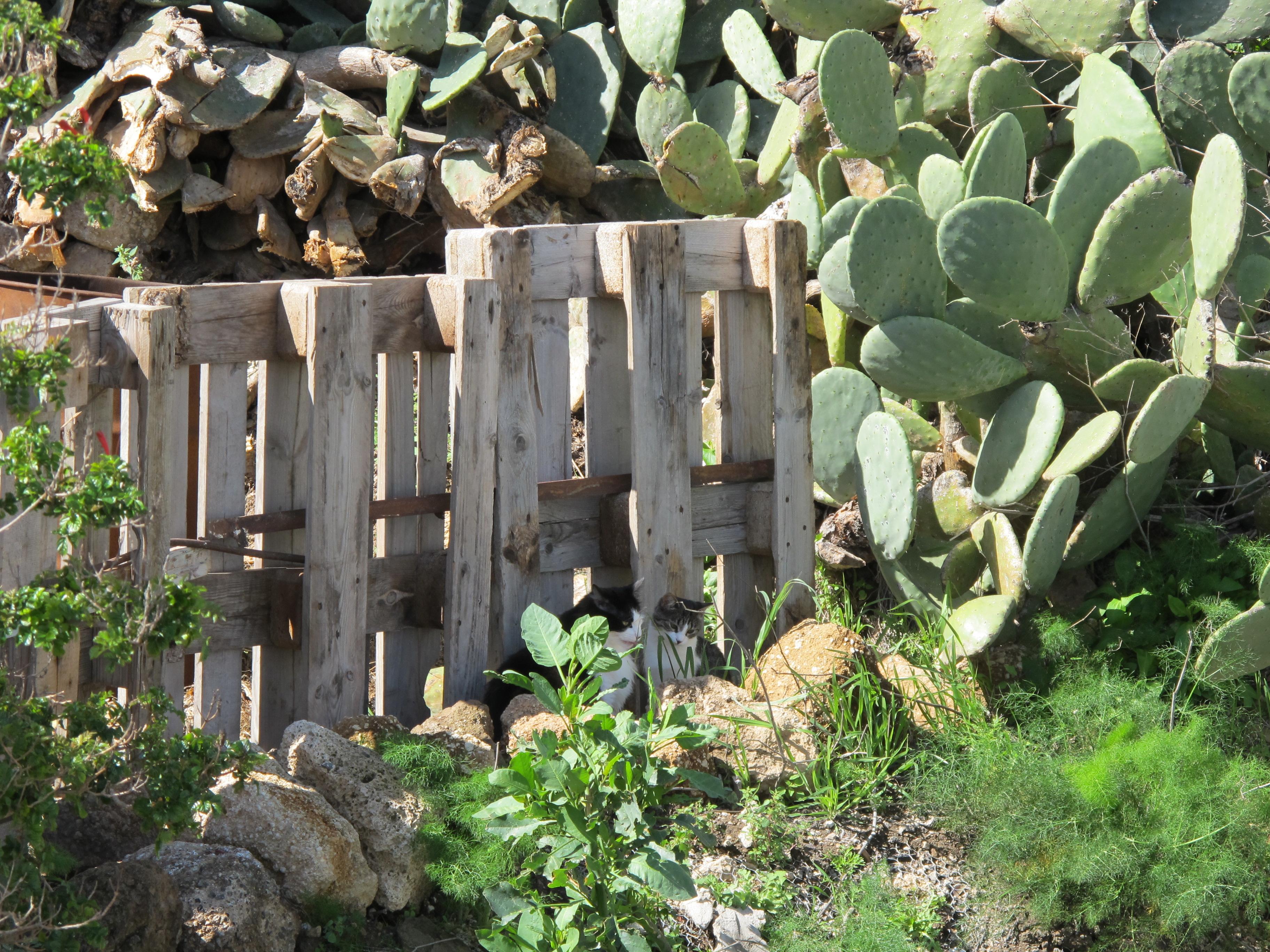 Vallas de madera baratas como cercar jardines modernos de - Vallas jardin baratas ...
